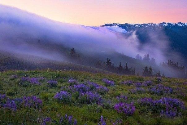 Туман в Национальном парке Олимпик, Штат Вашингтон