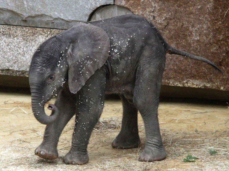 Слоны - единственные животные, у которых есть ритуал захоронения