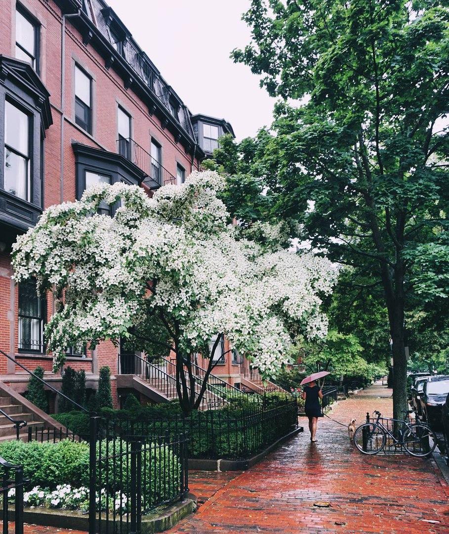 Дождливый Бостон