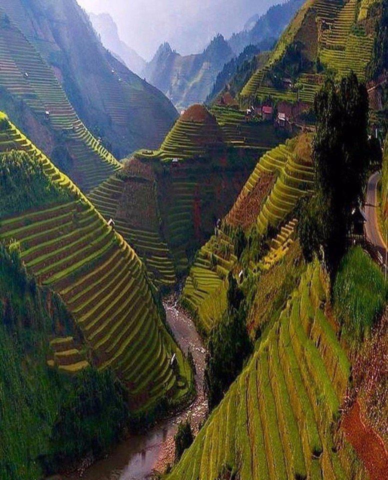 Рисовые поля в Бутане